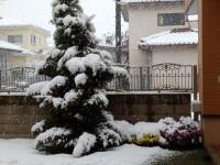 それを言うならこれはクリスマスツリー。ああ、菊さんごめんなさい。