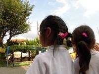 オシロイバナは夕方に咲く 髪に飾るおしゃれさん